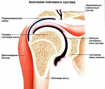 МРТ плечевого сустава: цены и где сделать МРТ плеча в СПб