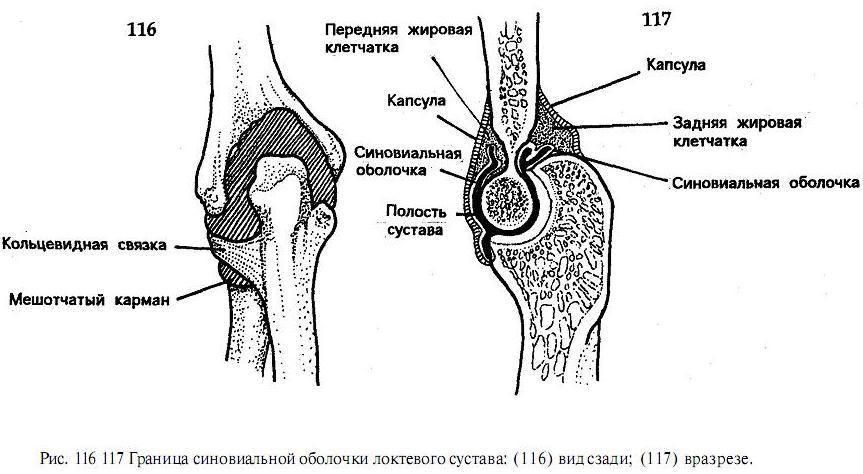Мрт локтевого сустава в спб цена лекарства для лечения растяжения связок плечевого сустава