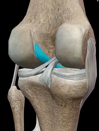Мрт коленного сустава цена крутит суставы что делать